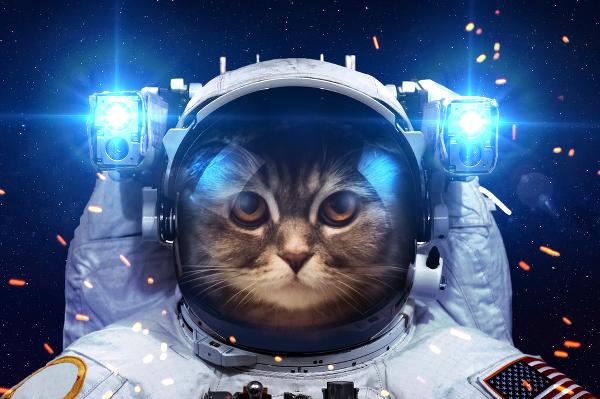 spacecat3